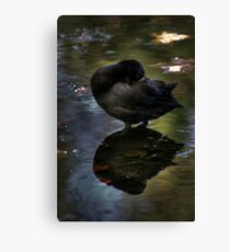 At Peace with Nature..... Canvas Print