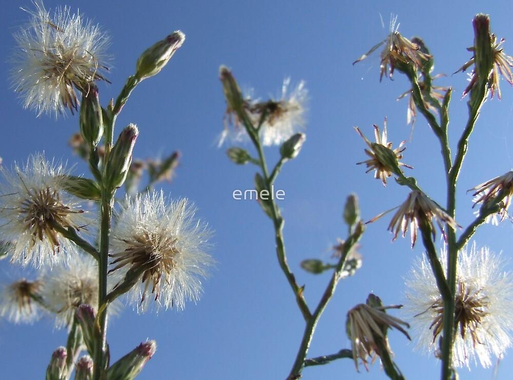 Dandelion Summer Card by emele