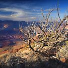 Grand Canyon by Steve  Taylor