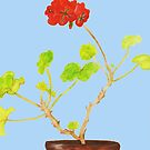 Watercolor Geranium Plant by Paula Parker