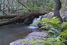 Masons Falls by mspfoto