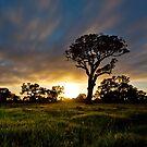 Dunkield Moonset Tree by pablosvista2