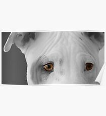 freckles the pit 2 Poster