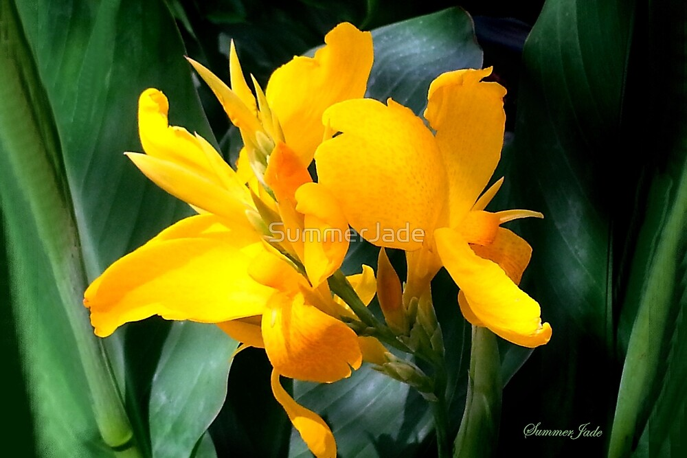 A Bright Spot by the Pond ~ Cannas by SummerJade