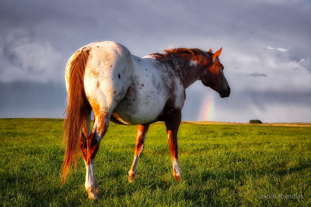 Prairie Horse with rainbow after the storm by colorfulbundles