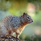 Grand Squirrel... by Tracie Louise