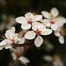 White Bloom by Martina Fagan