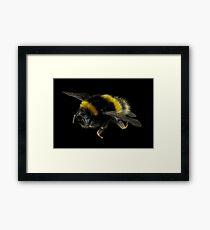 European Bumble Bee Framed Print
