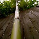 Bamboo Shoots (Up).  by shrimpies4life
