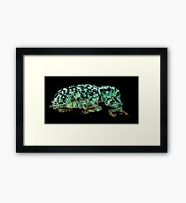 Botany Bay Weevil (Chrysolopus spectabilis) Framed Print