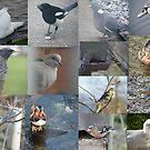 Birds by pat oubridge