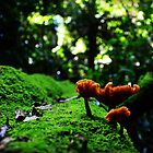 Fungi and Moss by myraj