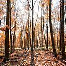 Woodland Walks by petegrev