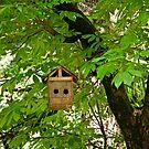 House of Bird by Sunil Bhardwaj