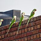 Parrots by Sunil Bhardwaj