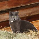 Barn cat by jewelsofawe