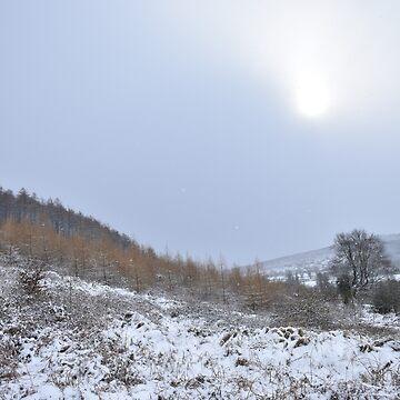 Winterglow by alisonchambers