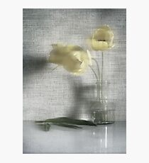 Three tulips in the blure Photographic Print
