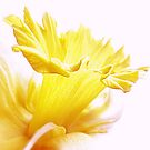 Spring Has Sprung by SexyEyes69