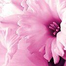Spring Pink by SexyEyes69