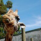 Silly Giraffe II. by shrimpies4life