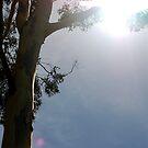 Melting Eucalyptus. by shrimpies4life