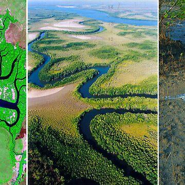 Exploring Scale - Mangroves by kestrel