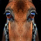 The Thin Horse by heidiannemorris