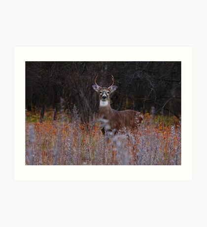 A regal stance - White-tailed Deer Art Print