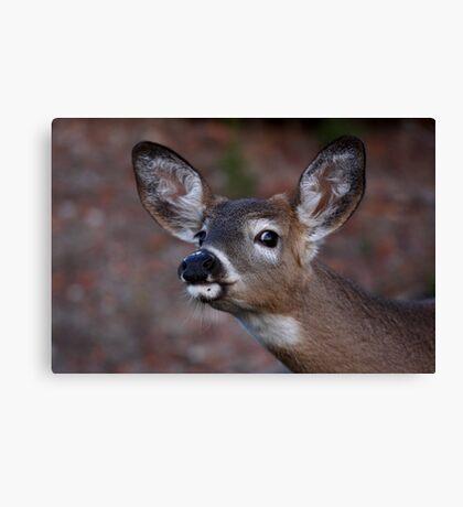 Kiss me! - White-tailed Deer Canvas Print