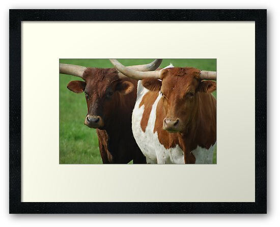 The Bovine Brothers by Tori Snow