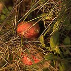 Apples in the Undergrowth. by Billlee
