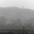 ohia forest in rain and fog by Lawrence Taguma