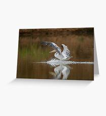Pelican landing Greeting Card