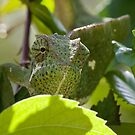 Chameleon 2 by David Clarke