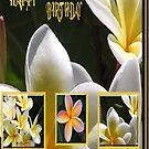 Frangipanni Birthday by judygal