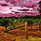 Halls Gap Winery V02 by Jennifer Craker