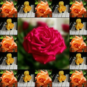 Summer Roses Collage by kathrynsgallery