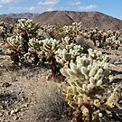 Jumping Cholla Cactus Field by Nickolay Stanev