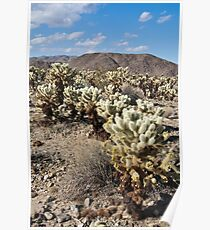 Jumping Cholla Cactus Field Poster