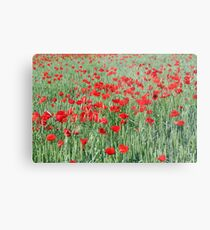 green wheat and red poppy flowers Metal Print