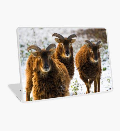 Sheep Laptop Skin
