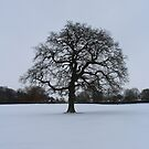 Tree in Snow Scape by MMCFraser