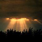 There is always a light by Mojca Savicki
