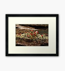 What Is It? Solved by CynLynn,  British Soliders Lichens Framed Print