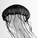 Jellyfish by Rachel Blumenthal
