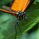 Butterfly Macro by Rachel Blumenthal