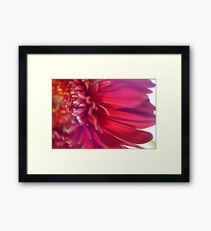 Pink And Red Explosion Framed Print