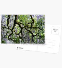 Wisteria Postcards