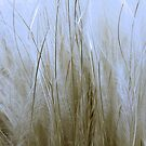 Feather Grass by SexyEyes69
